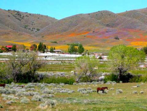 Sell Your House Fast Leona Valley Ca